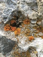 bio meets mineral