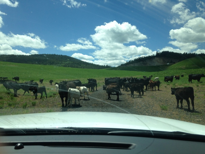 AN IDAHO TRAFFIC JAM